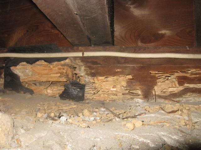 termites in sill